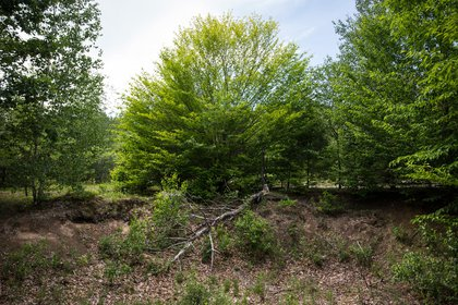 A section of land, previously closed due to an ongoing manhunt for two escaped convicts, is seen after officials decided to change strategies and reopen the restricted area outside Dannemora