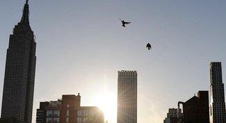 Cuomo Rejects Bill On Taking Steps Toward Bird-Friendly Buildings