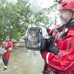 An HSUS rescue team manages to find two cats (AP Images for HSUS)