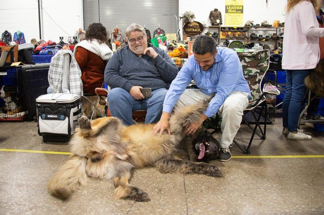 The Best Thanksgiving Tradition Is The National Dog Show