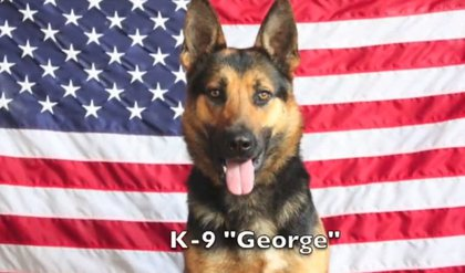 """George"" named in memory of NYPD Police Officer George Wong."