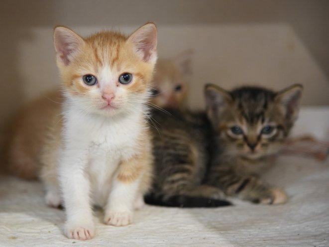 Image result for kittens images