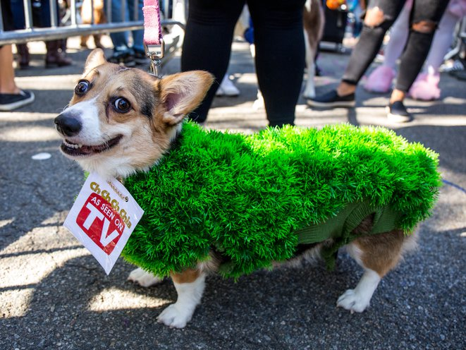 Carrier Park Halloween Dog Parade 2020 Photos: All The Good Dogs At The 2017 Tompkins Square Halloween