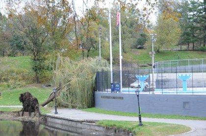 Fallen Willow tree at Lasker Pool