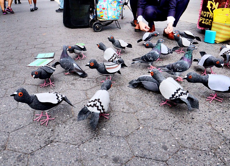 pigeons interacting with fake pigeons
