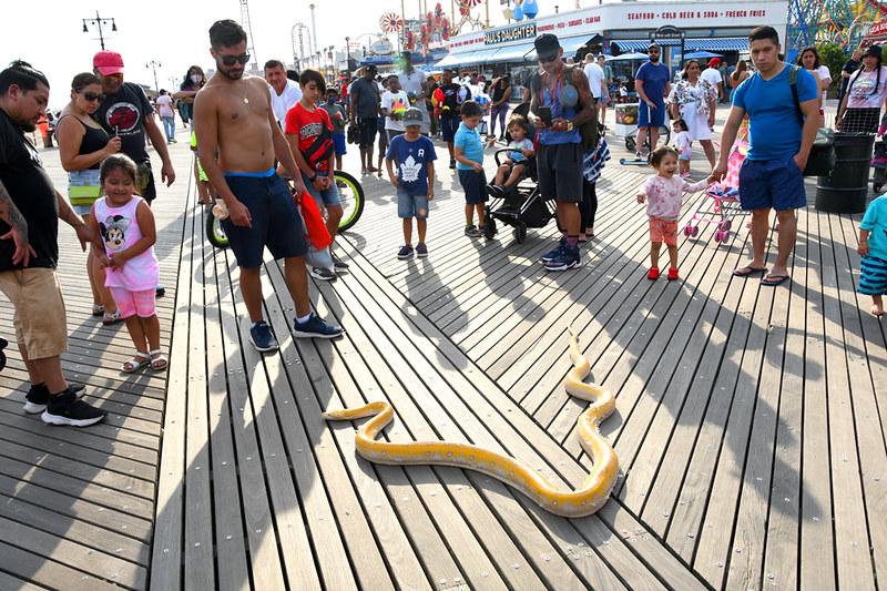 a snake on the Coney Island boardwalk